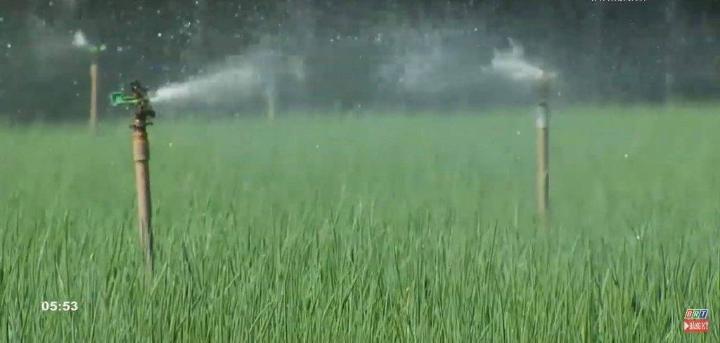 tưới nước cho hành lá bằng công nghệ hiện đại