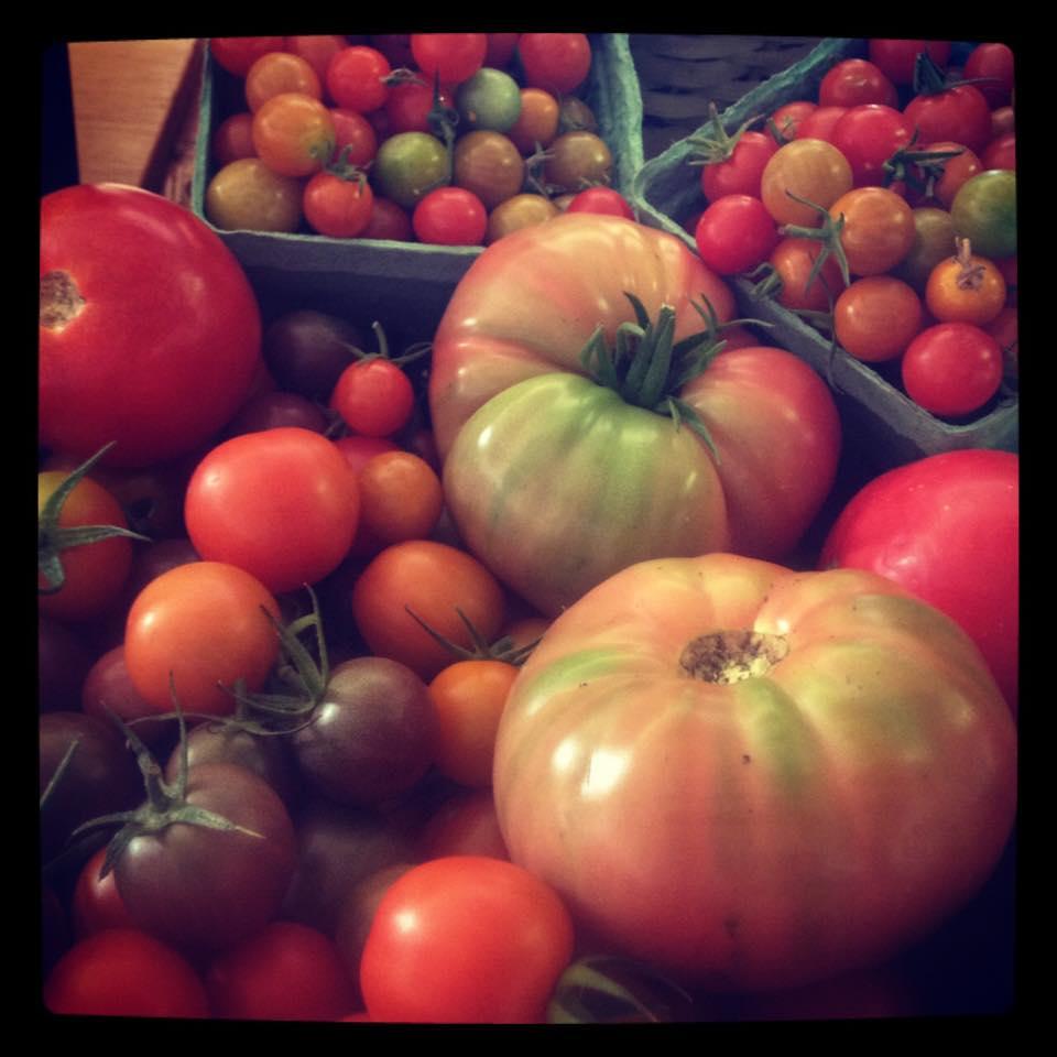 quả cà chua bạch tuộc