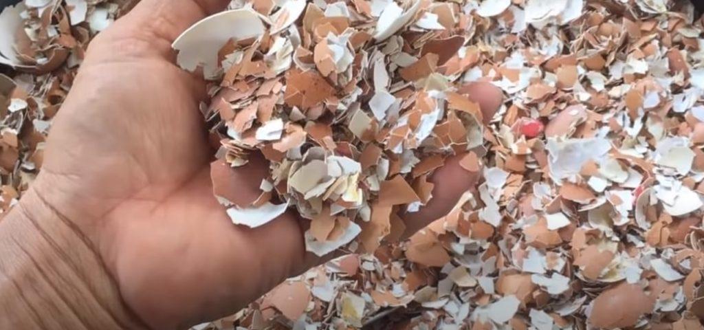 cách ủ phân hữu cơ