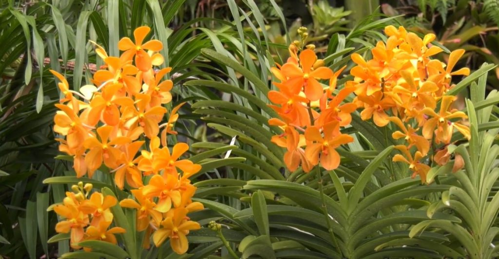 """Cách trồng lan """"chuẩn xác & đầy đủ nhất"""" nở hoa bền đẹp quanh năm"""