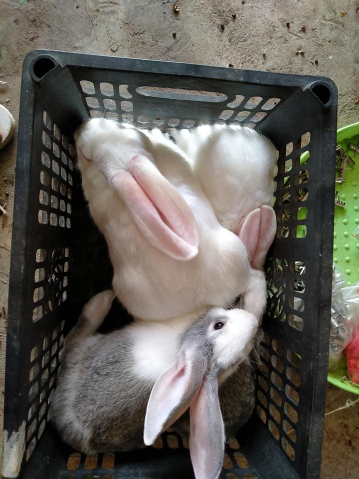 """Cách nuôi thỏ """"cực dễ"""" cho người mới bắt đầu & Mẹo chăm sóc"""