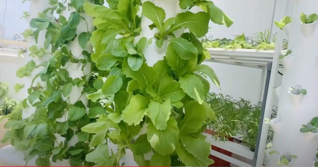 6 phương pháp trồng rau sạch tại nhà phổ biến