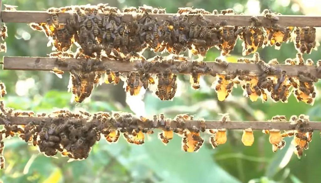 ky thuat nuoi ong lay mat