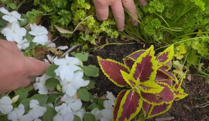 """Phân bón hữu cơ """"tốt nhất"""" & 8 cách ủ phân hiệu quả"""