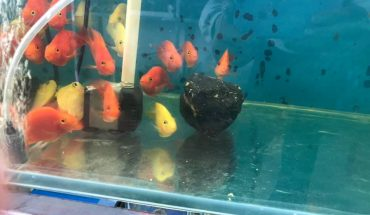 cá cảnh thủy sinh