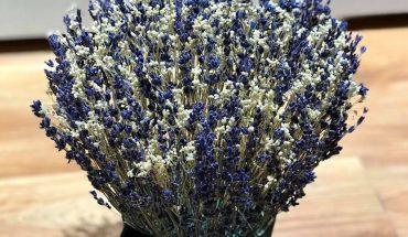 trồng hoa oải hương